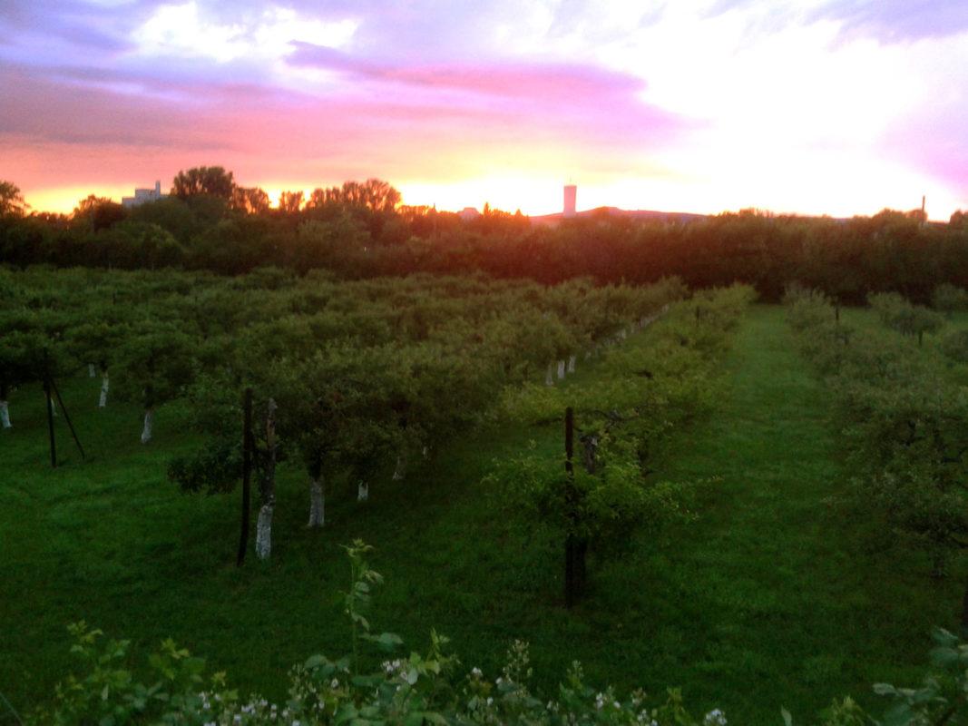 Sunset on GUT HAUSEN