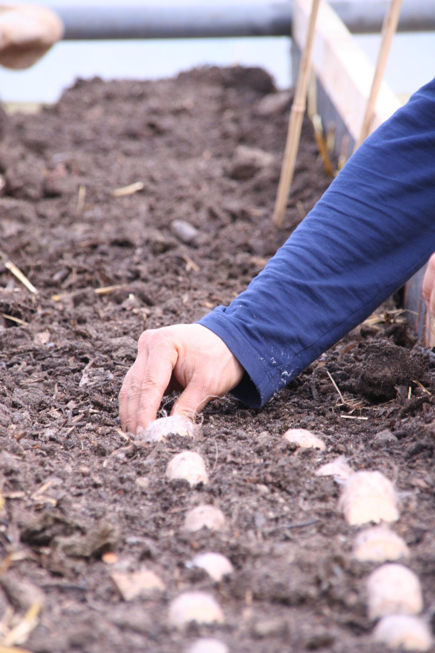Lichtwurzeln pflanzen & Kompost schaufeln