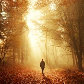Spaziergang im Wald bei atemberaubender Lichtstimmung im Nebel